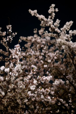 上野公園のお花見を夜桜で!場所取りや屋台は?女子会で堪能!