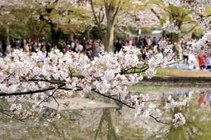 代々木公園 花見